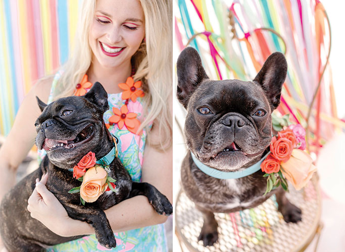 Frenchie with Flower Collar